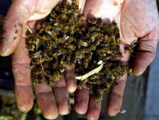 abejas-dead